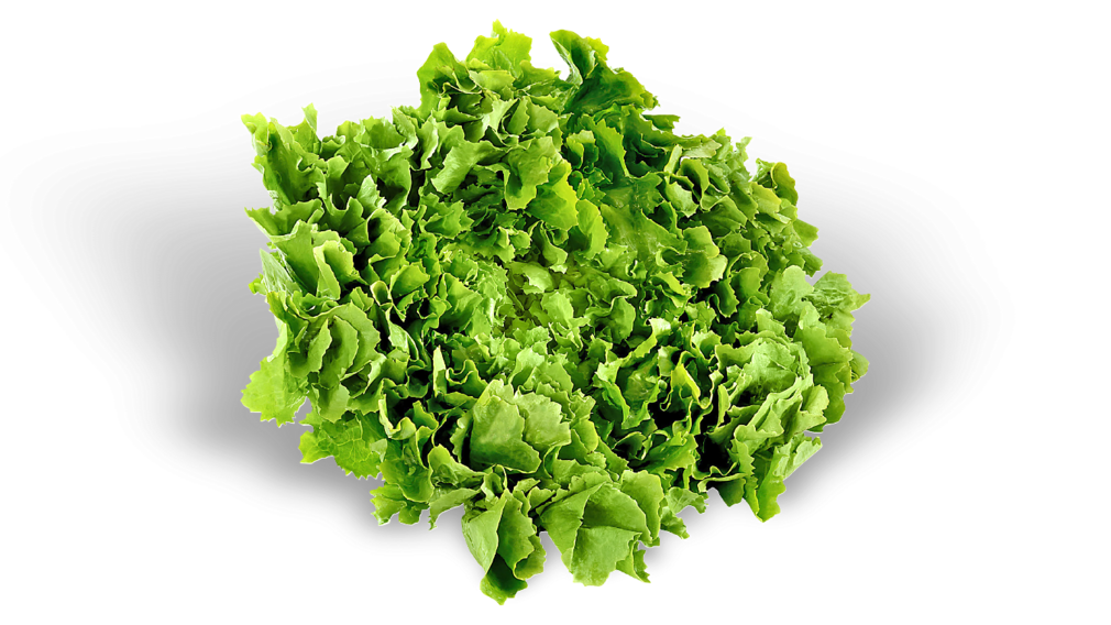 zelena salata domaća
