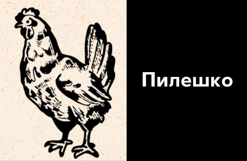 Скицирано изображение на жива кокошка