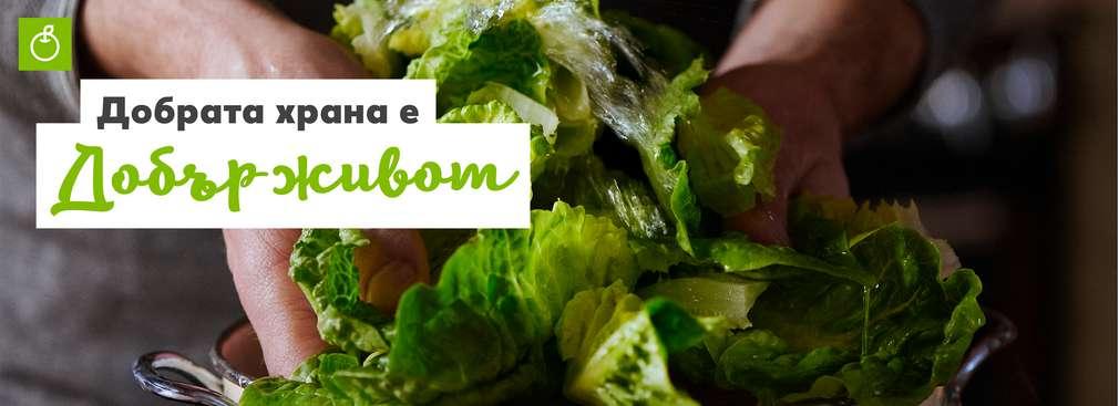 Изображение на зелена салата
