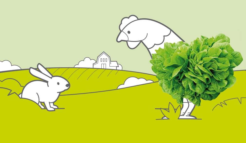 Илюстрация - заек и кокошка