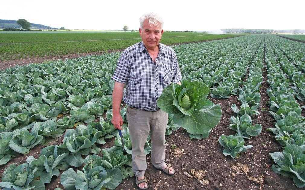Pan Moc pěstuje taky špičaté zelí