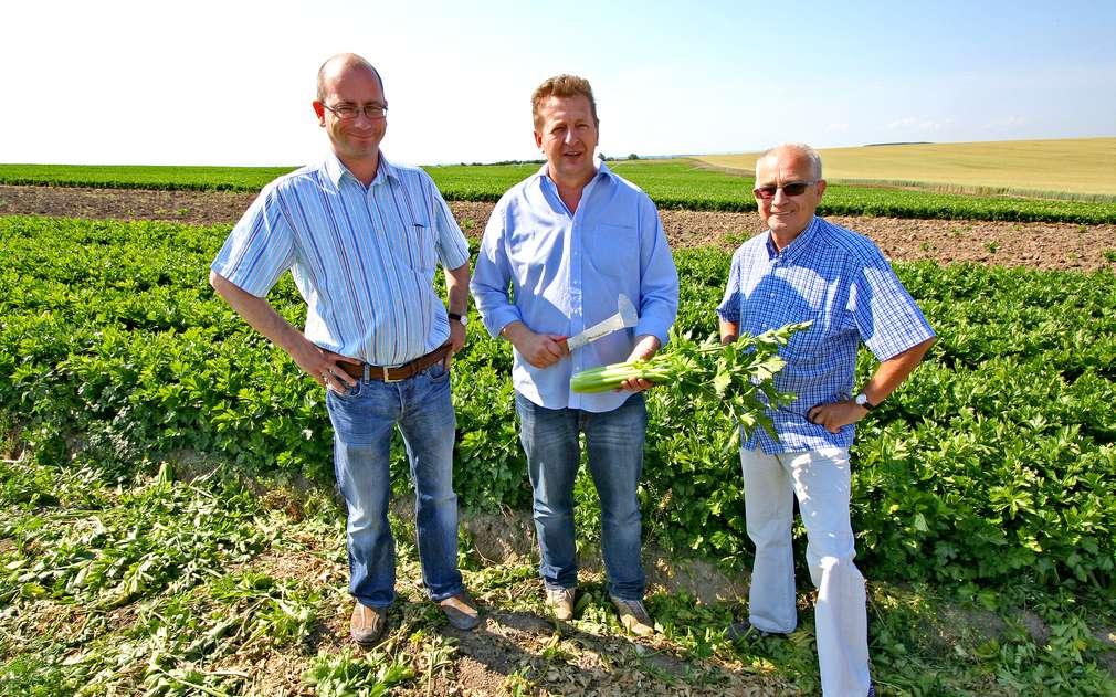 Podívali jsme se na pole, kde roste řapíkatý celer