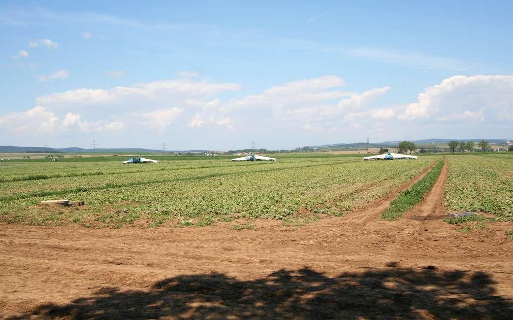 Na moravských polích se zelenině daří