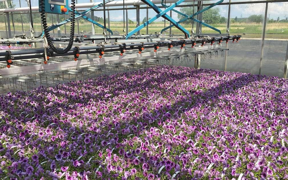 Ve skleníkách pana Valtra najdete mnoho druhů květin.