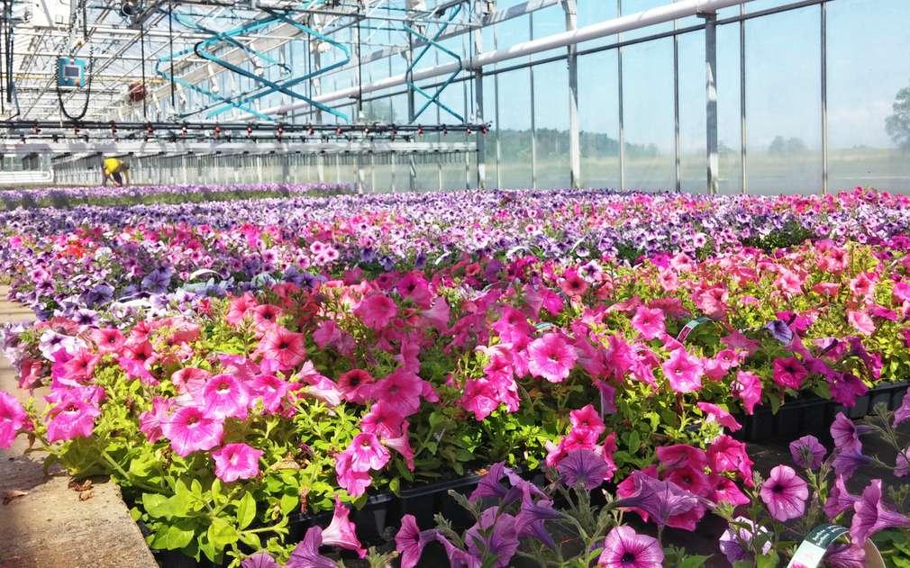 G's Group Holding nabízí obrovský výběr květin