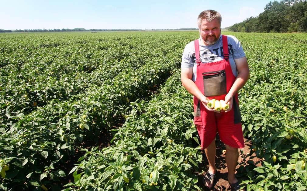 Mrkli jsme se na moravská pole s bílou paprikou