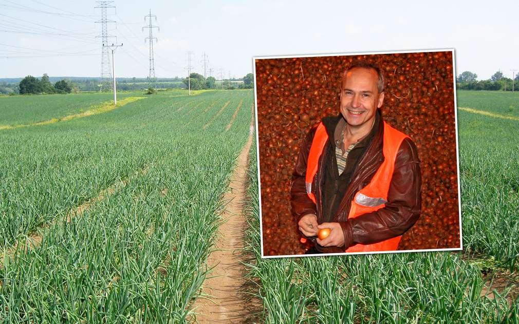 Pěstování cibule se věnuje firma Pěstitel Stratov