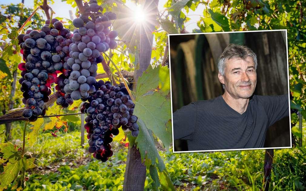 Pan Baloun pěstuje skvělé moravské víno
