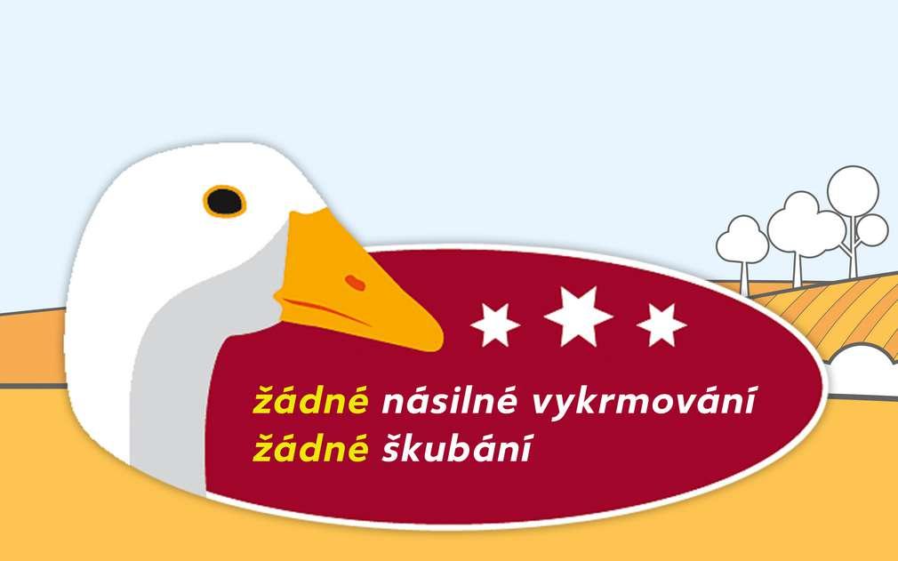 Kaufland se zasazuje proti násilí na kachnách a husách