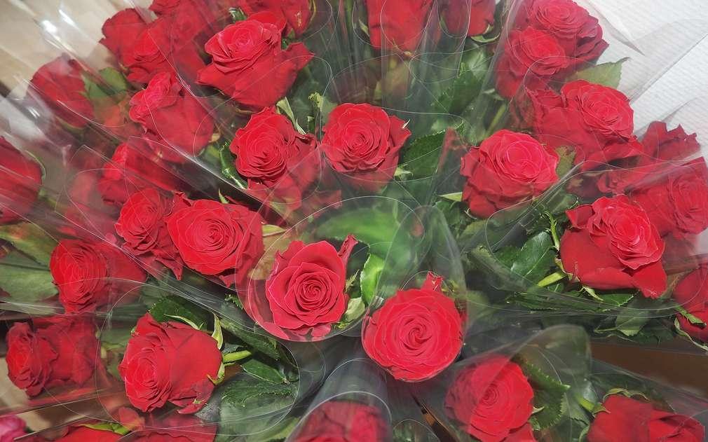 Rudé růže z Afriky