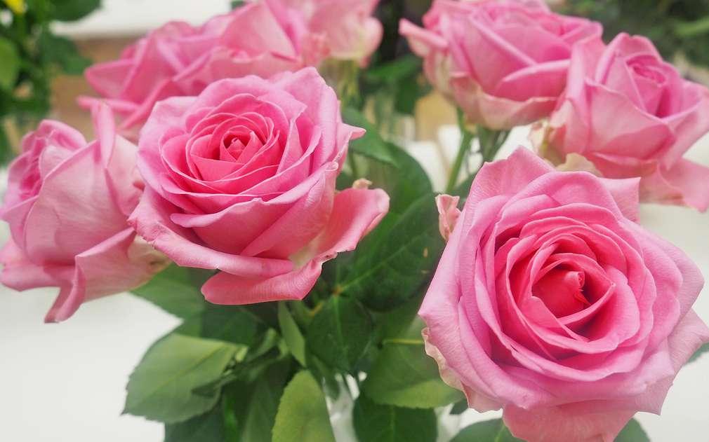 Krásné růže potěší každou ženu