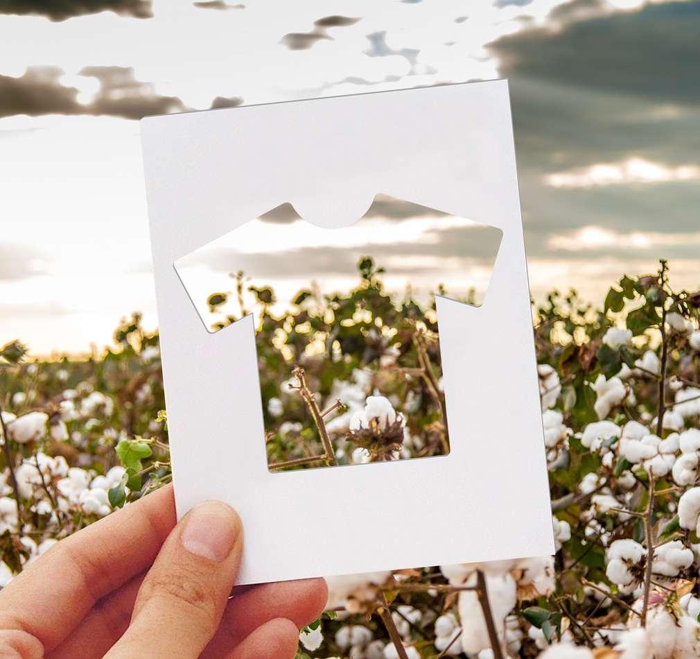 Изображение на памуково поле и парче хартия, изрязано във формата на фланелка