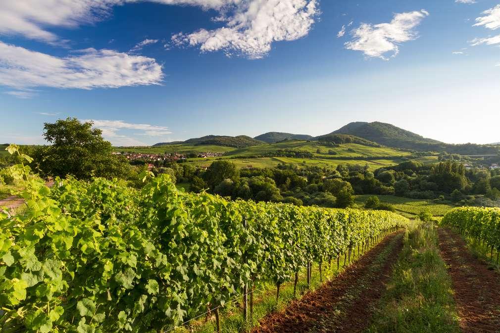 So schmeckt Deutschland: Die Pfalz