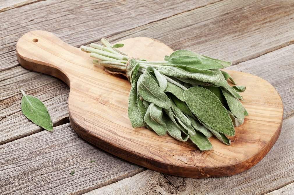 Salbei - Feine Blätter, starke Wirkung
