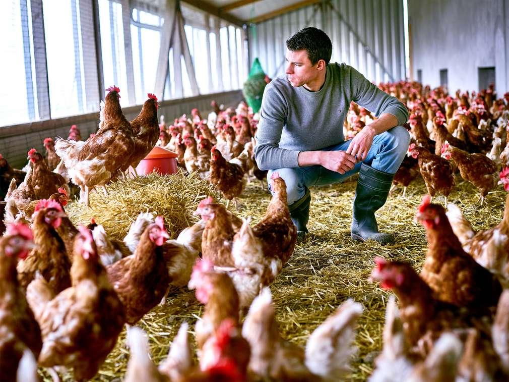Wo das Huhn die Eier legt