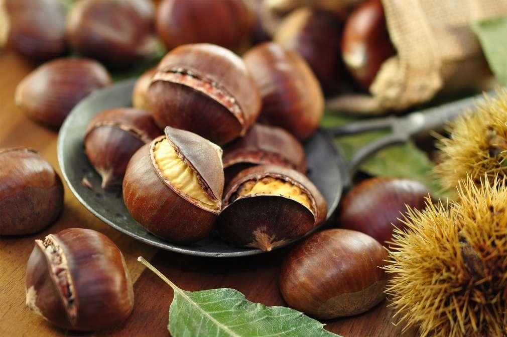Maronen-Saison: Im Herbst ist Esskastanien-Zeit!