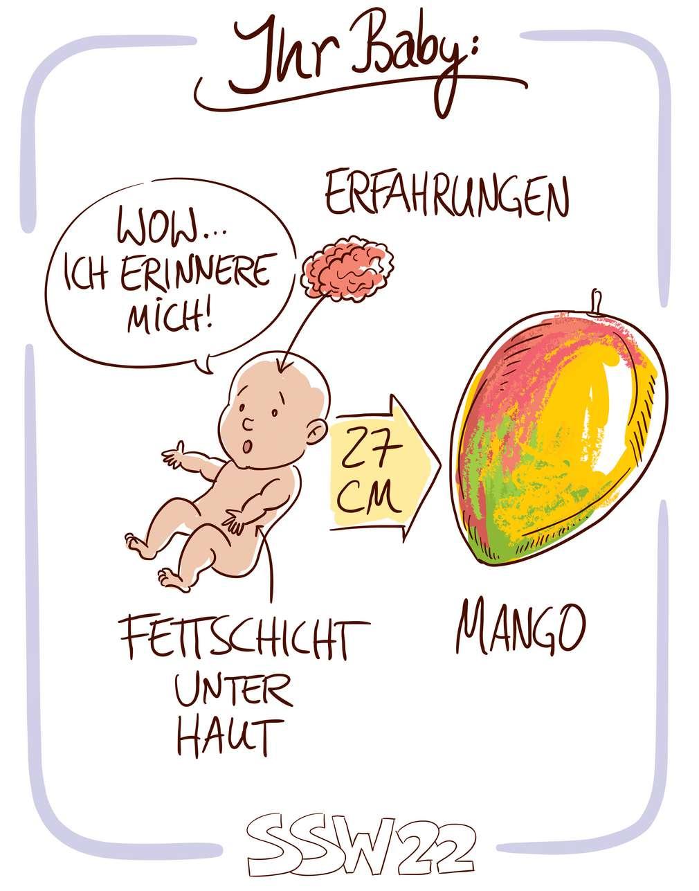 Infografik: Baby SSW 22