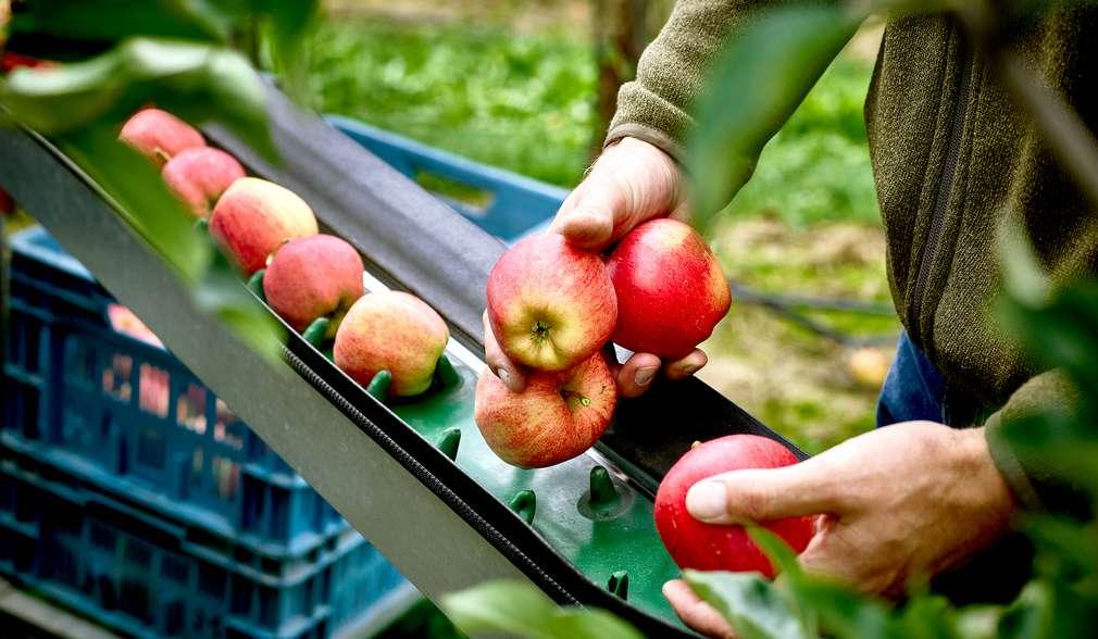 Apfel-Bauer