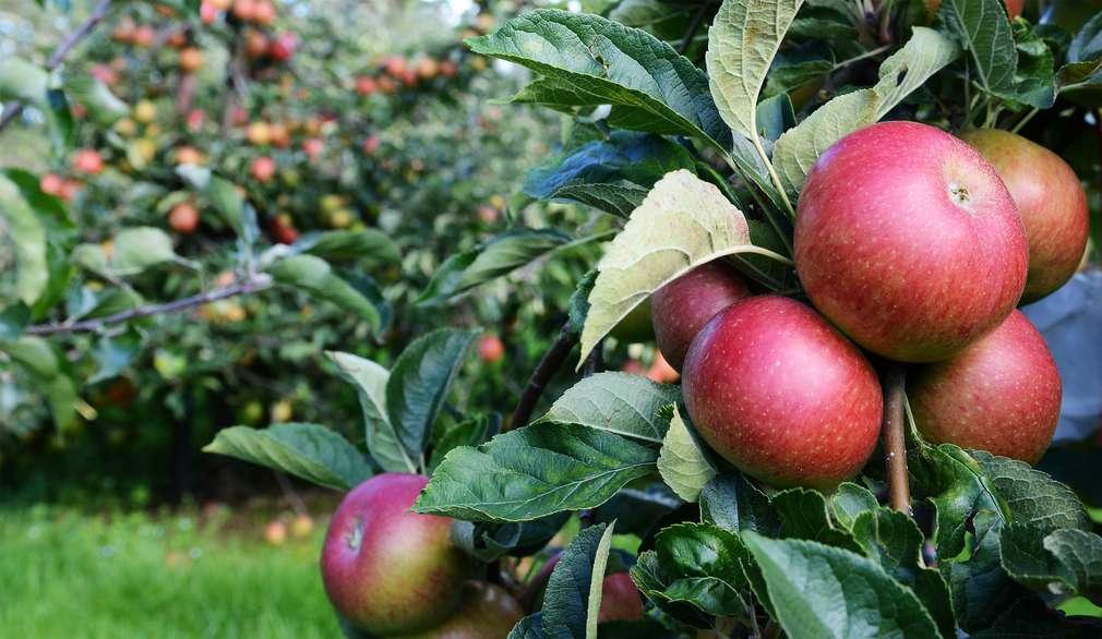 Länger jung bleiben durch Essen: Diese vier Lebensmittel helfen dir dabei