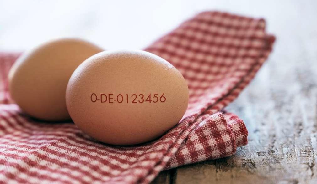 Bio-Ei mit aufgedrucktem Erzeugercode