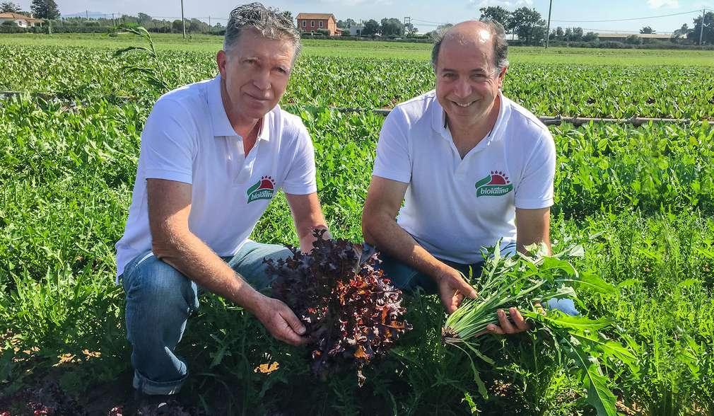 Demeter-Salatbauern