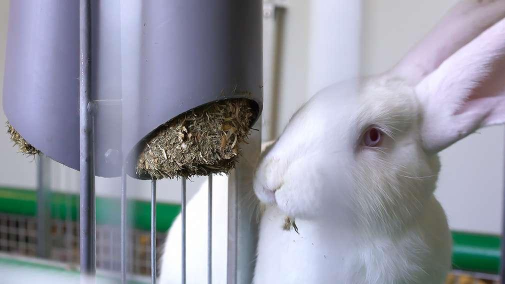 Kaufland stellt bundesweit einmaliges Kaninchen-Projekt vor