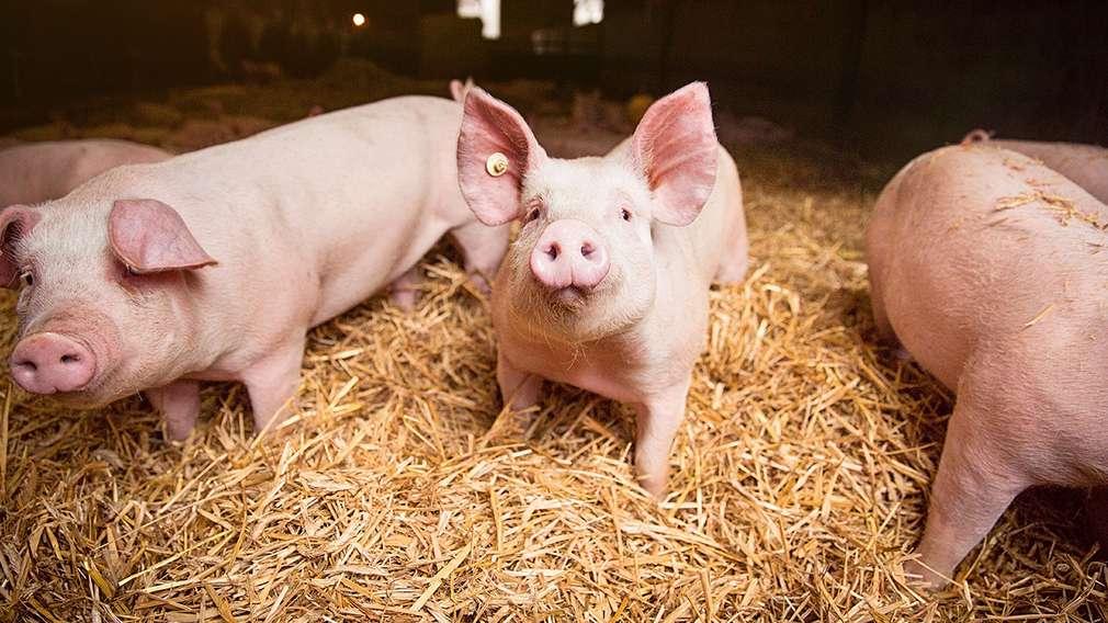 Die bewusste Wahl: Hochwertiger Fleischgenuss mit Wertschätzung
