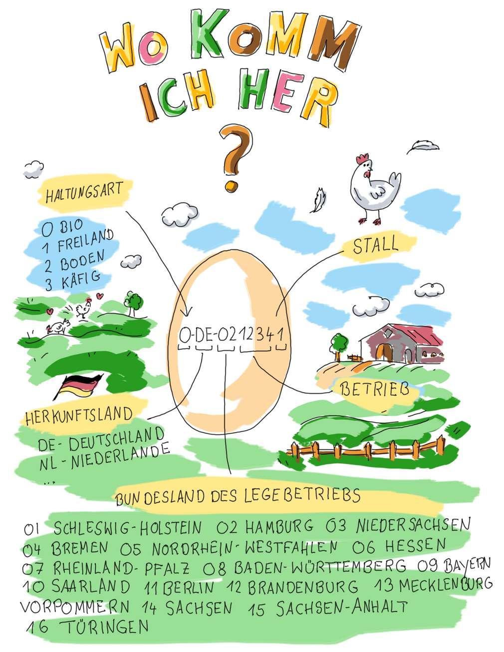 Infografik: Was bedeuten die Ziffern auf Eiern?