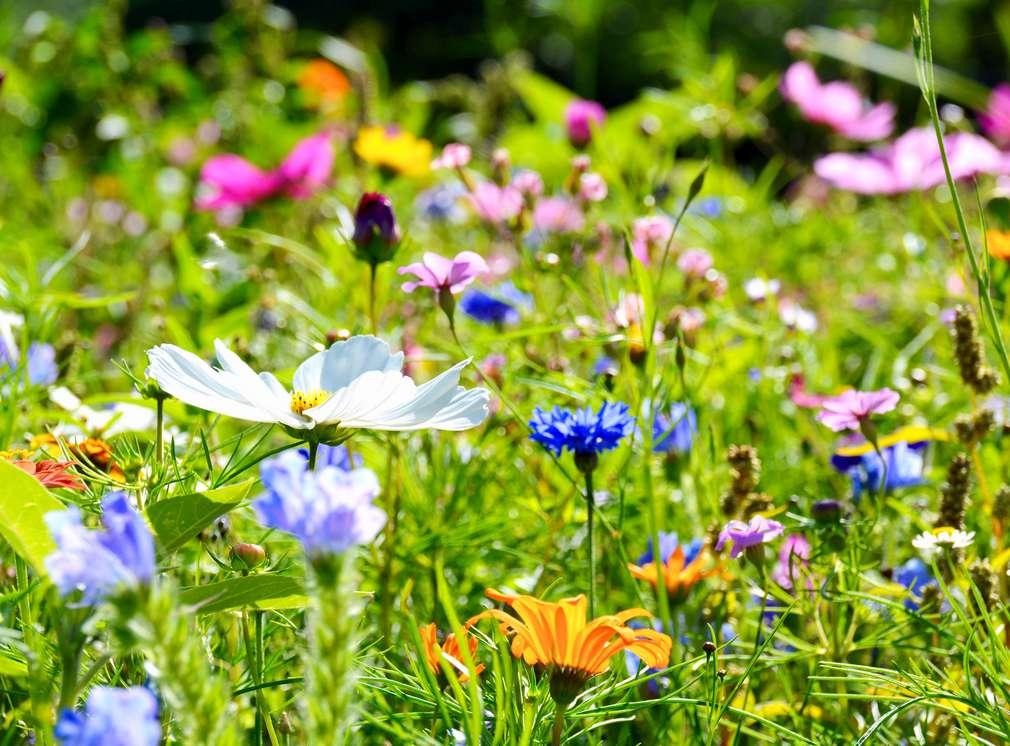 Kolorowa łąka pełna kwiatów