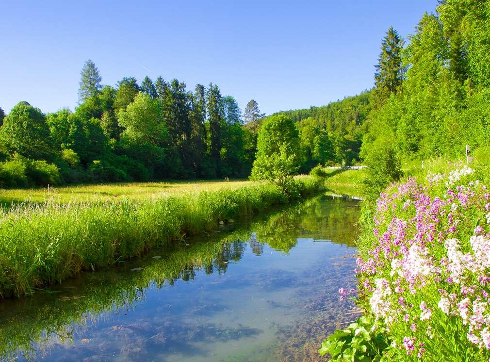 Łąka z rzeką