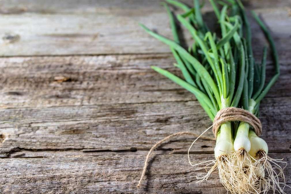 Frühlingszwiebeln – die perfekten Begleiter für eure Frühlingsküche