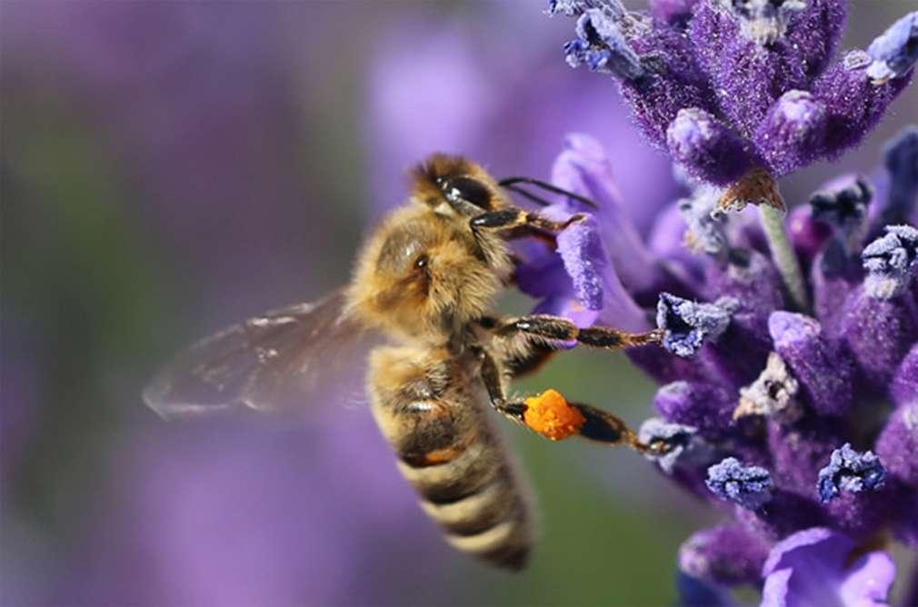 Honig – mehr als ein süßer Brotaufstrich