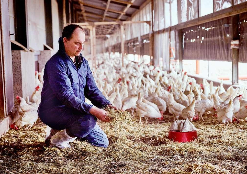 Herzenssache Tierwohl: Eier von Hennen ohne Schnabelstutz