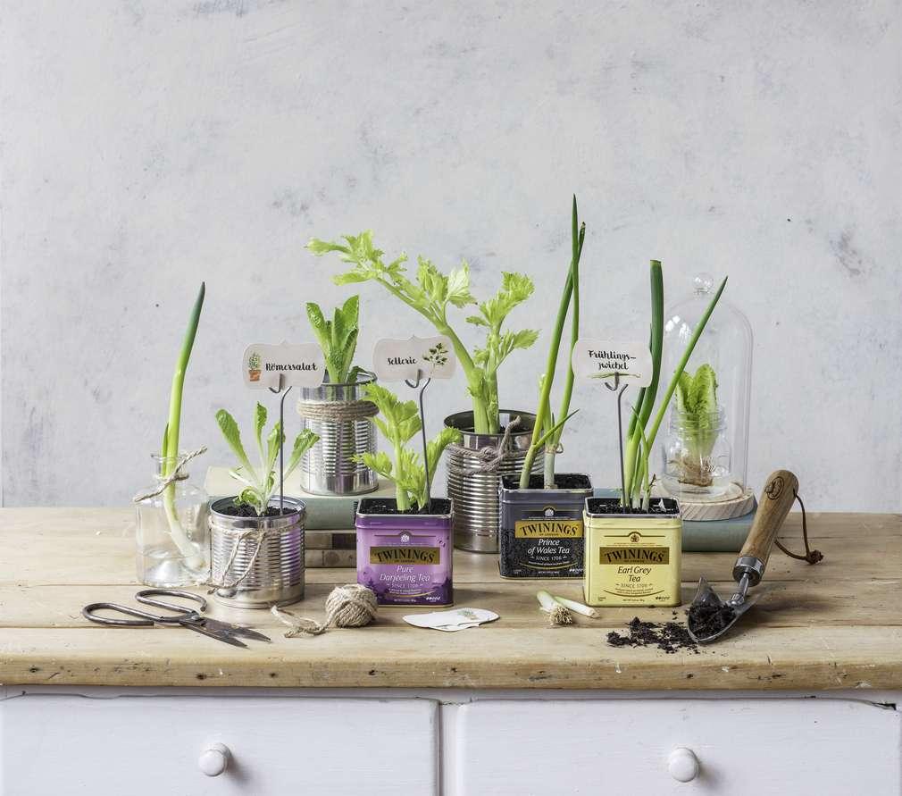 Projekt Regrow: So zieht ihr Gemüse nach