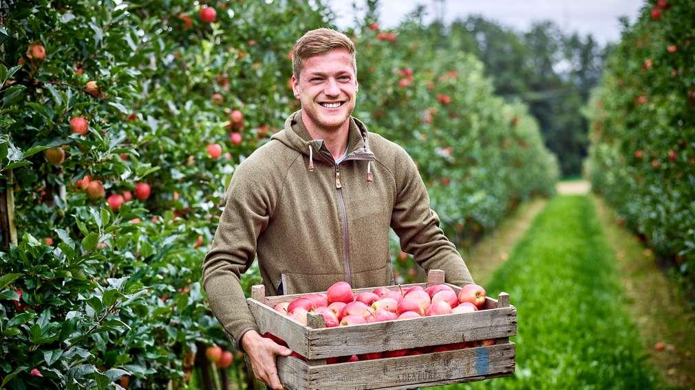 Apfel Bauer Ernte