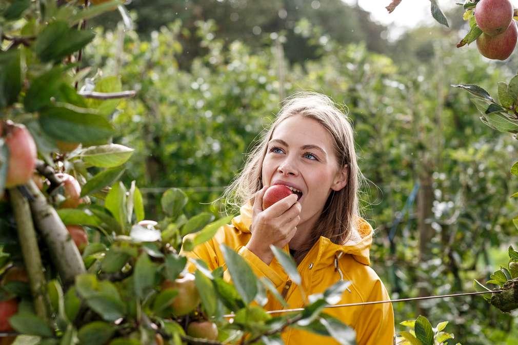 Frau isst Apfel auf Apfelplantage