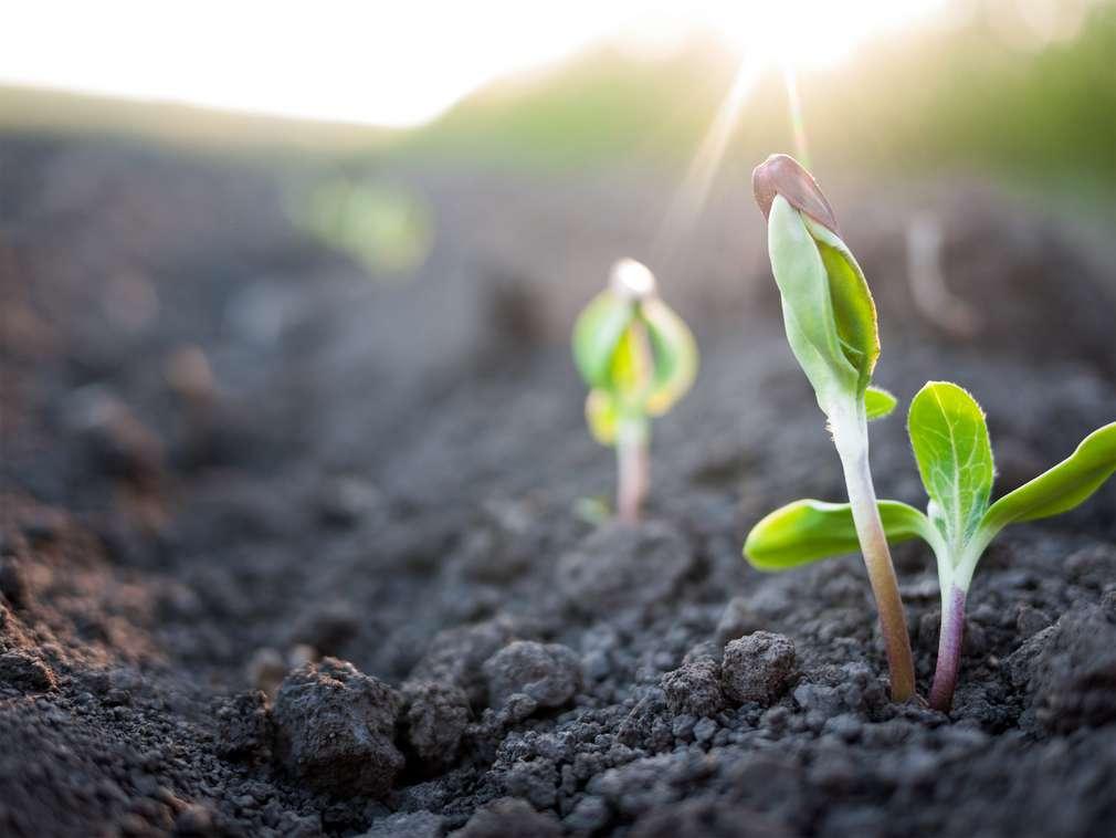 Slow Food: Bewusstes Essen mit Genuss