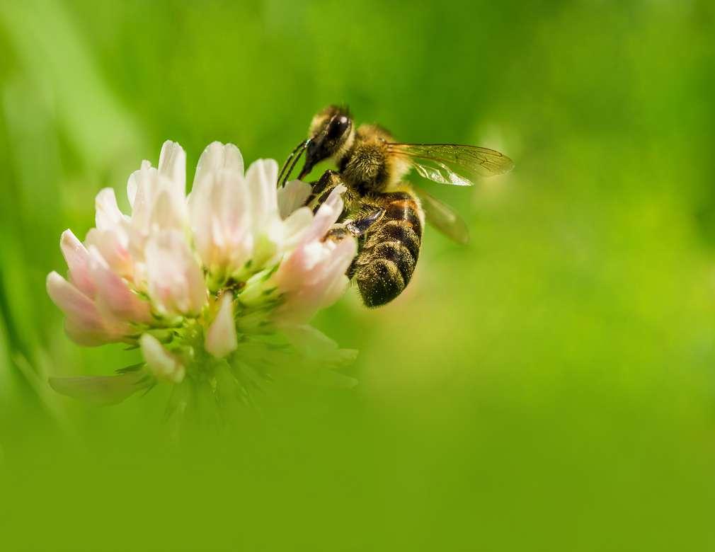 Umweltbildung: Fleißige Bienchen