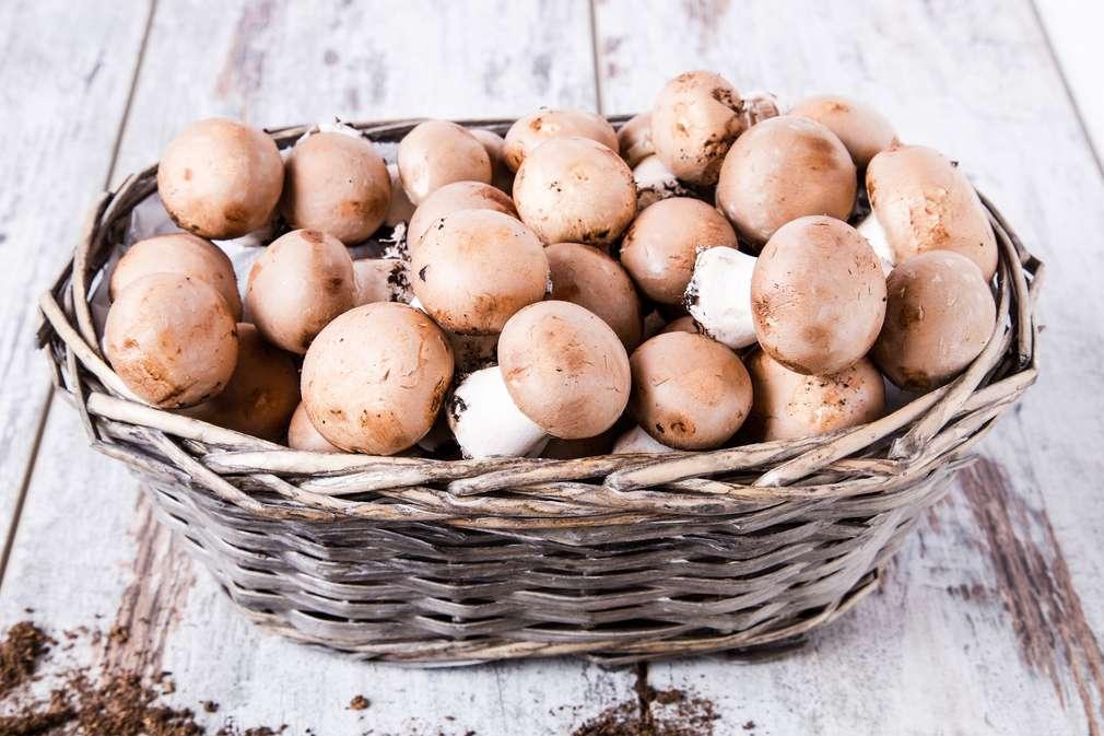 Champignons putzen für den vollen Pilz-Genuss