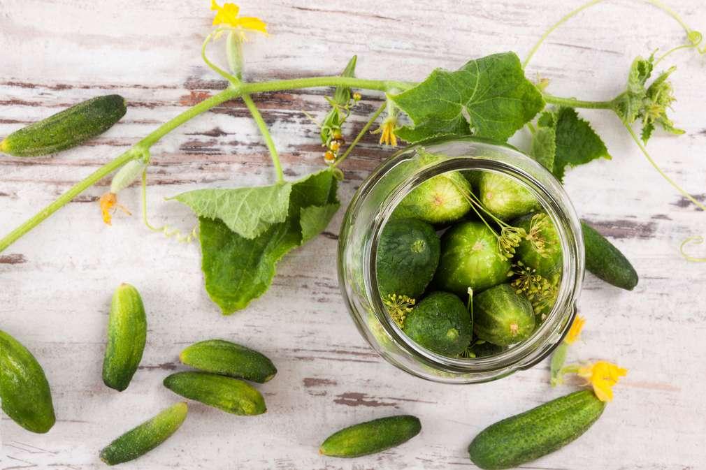 Gewürzgurken: Die feinen Unterschiede der Gurken aus dem Glas