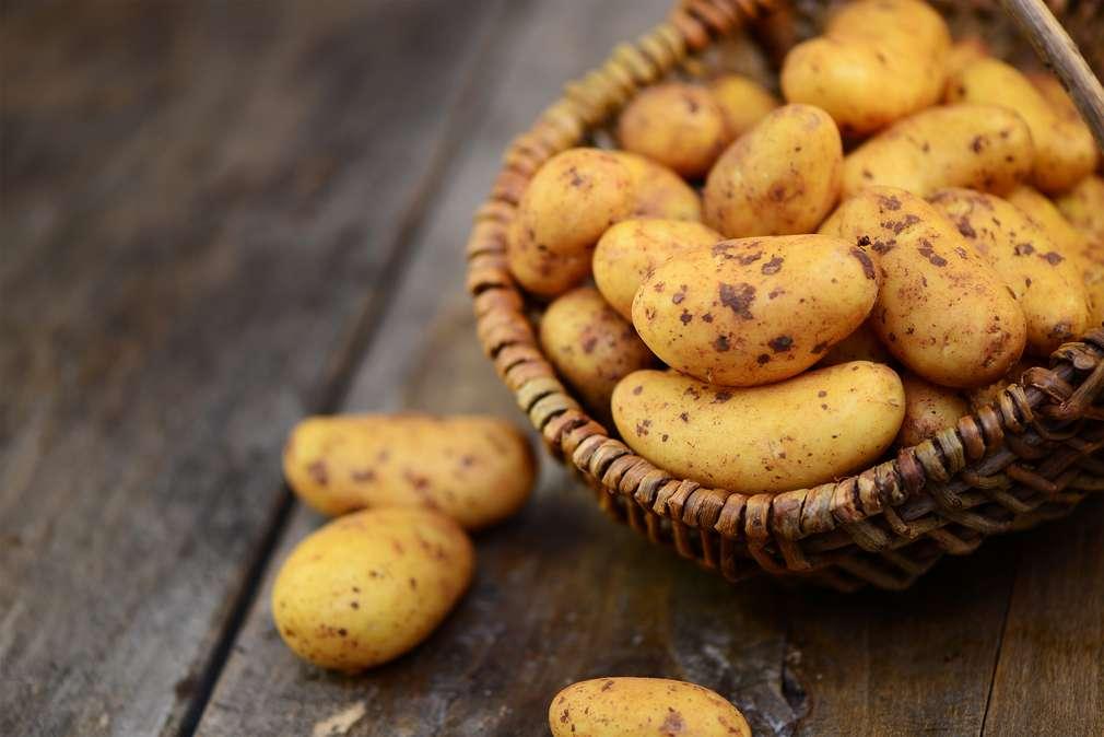 Fest- oder mehligkochende Kartoffeln: Welche eignen sich wofür?