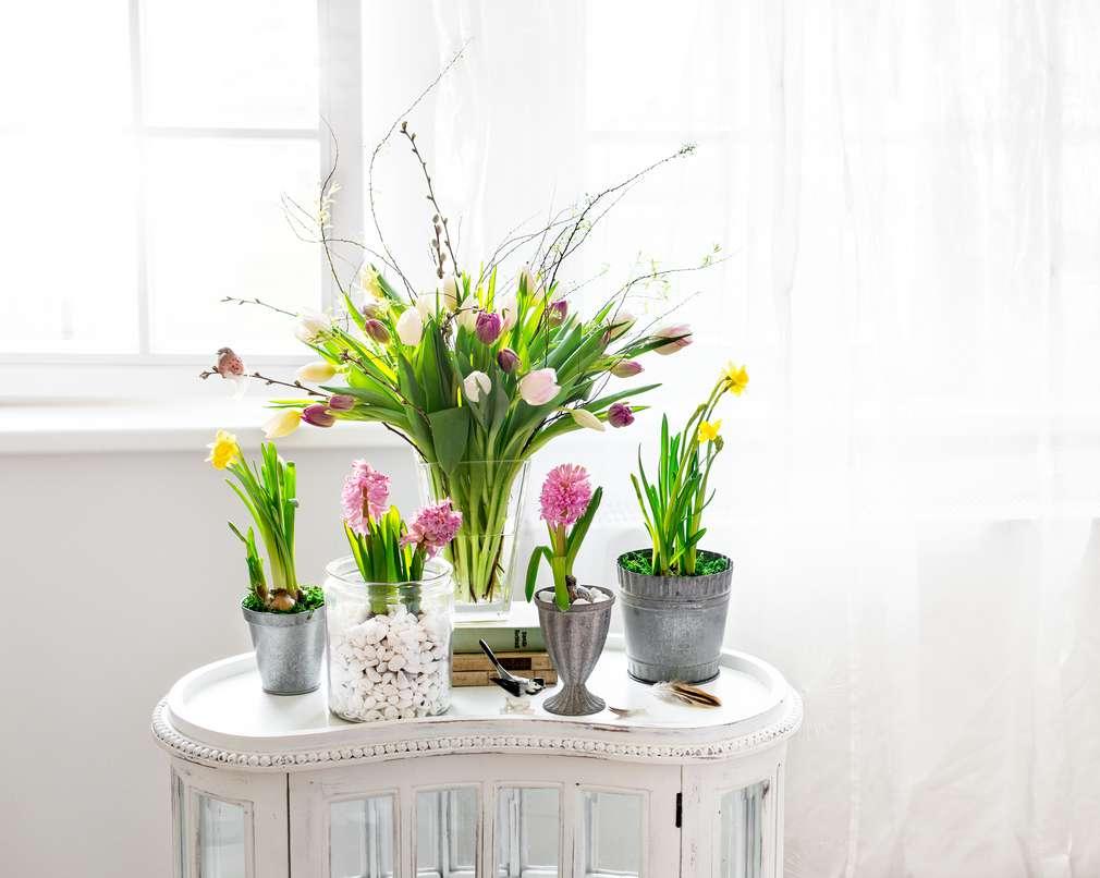 Aufgeblüht - So bleiben Frühlingsblumen lange frisch