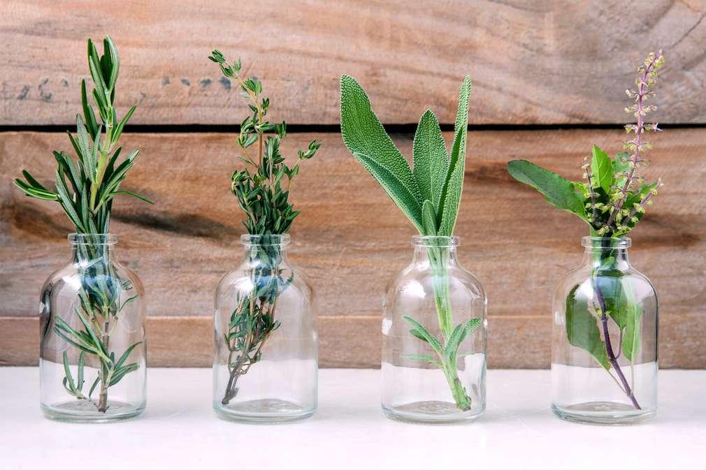 Grüne Tischdeko: Hol Dir den Frühling auf den Tisch