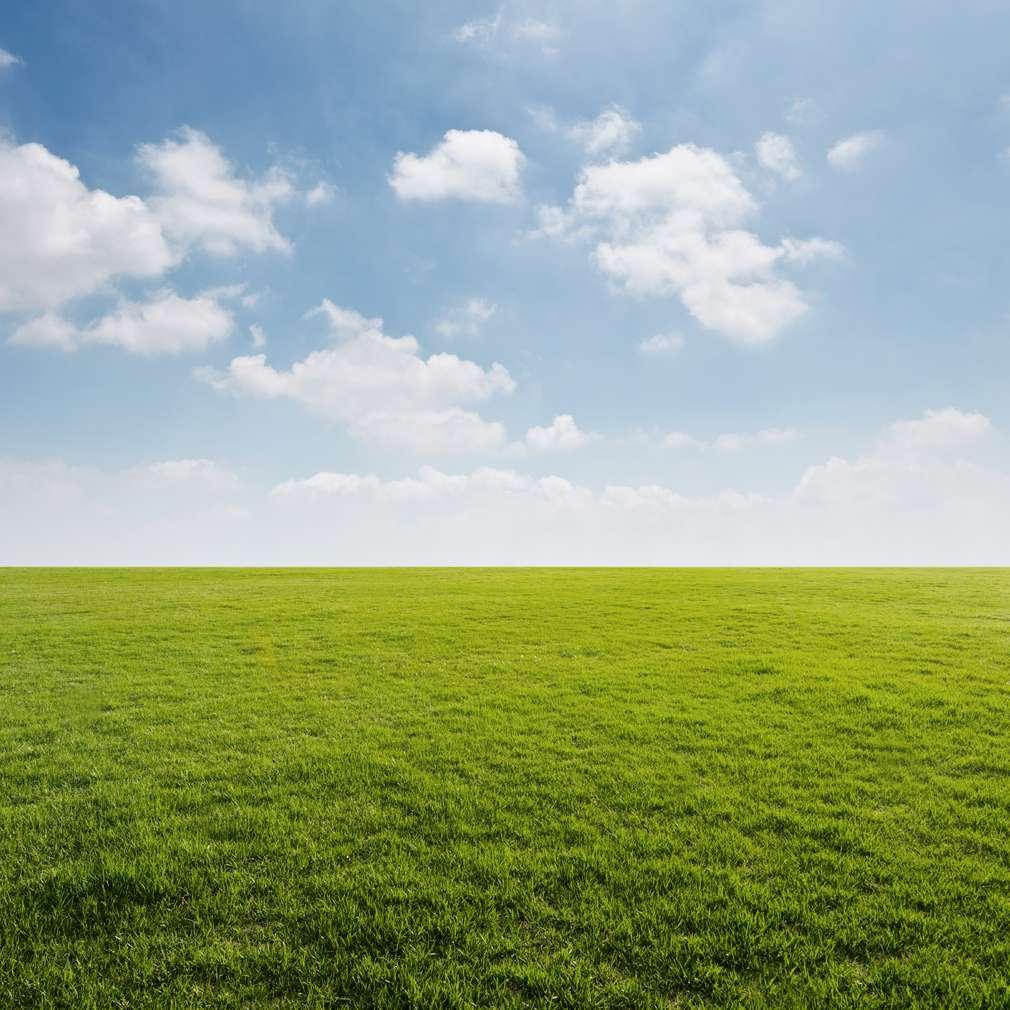 Grüner Rasen mit blauen Himmel und weißen Wolken