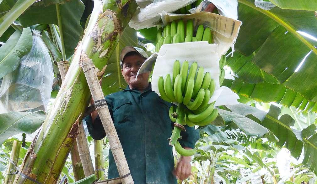 Höhere Anbauerfolge durch optimierte Methoden