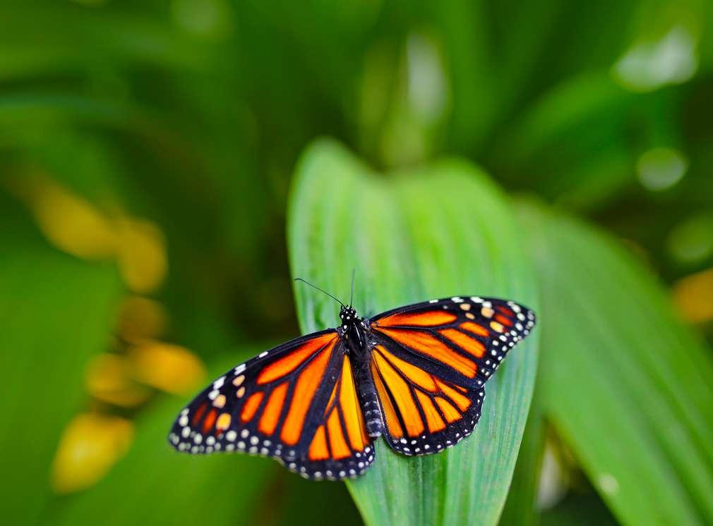 Ein Schmetterling sitz auf einem grünen Blatt