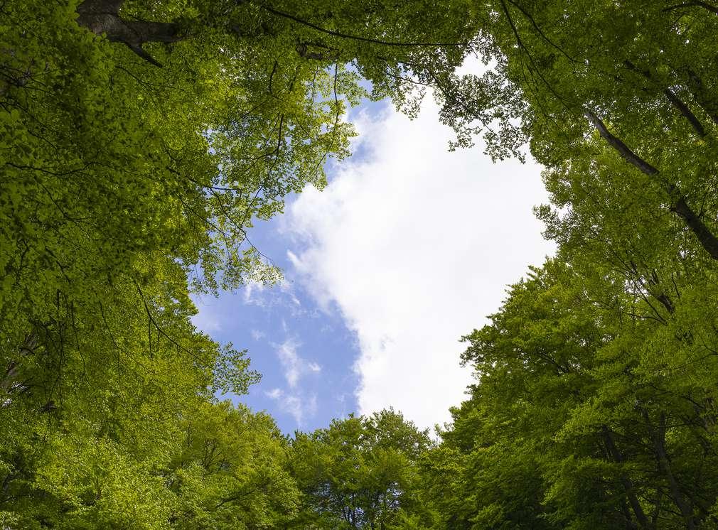 Wald aus Froschperspektive