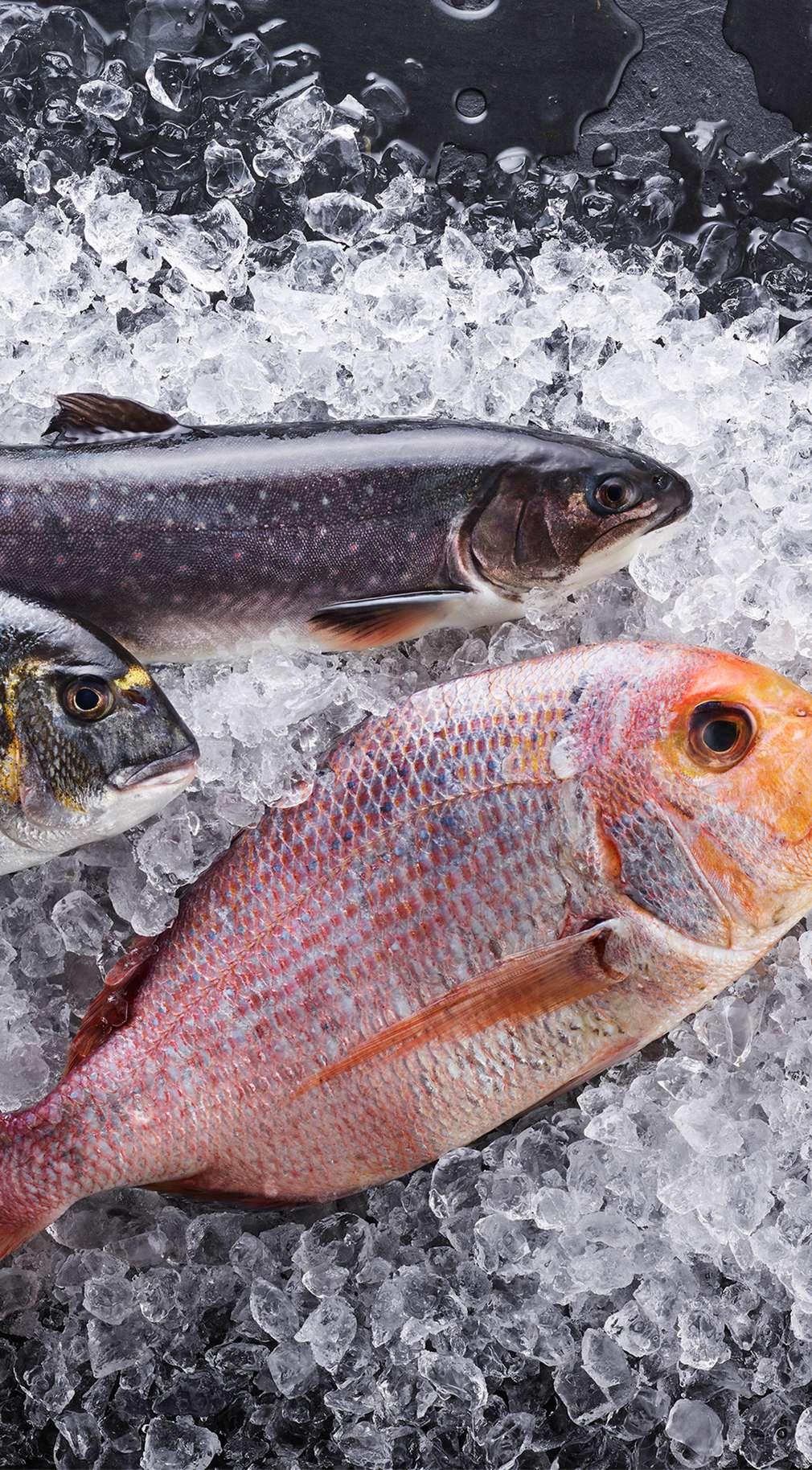 fisch kaufland