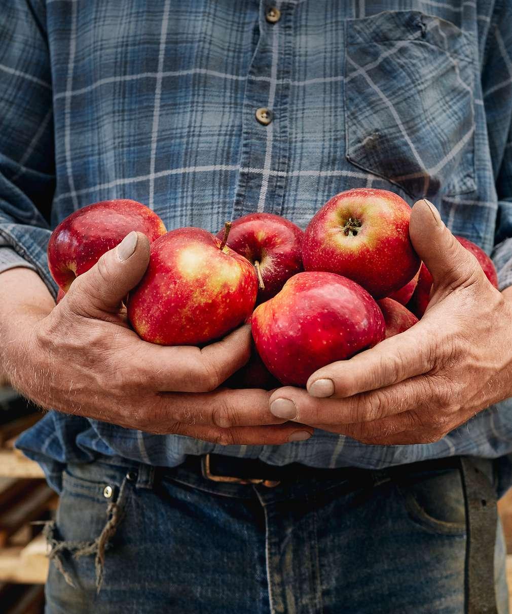 Bauer hält Äpfel