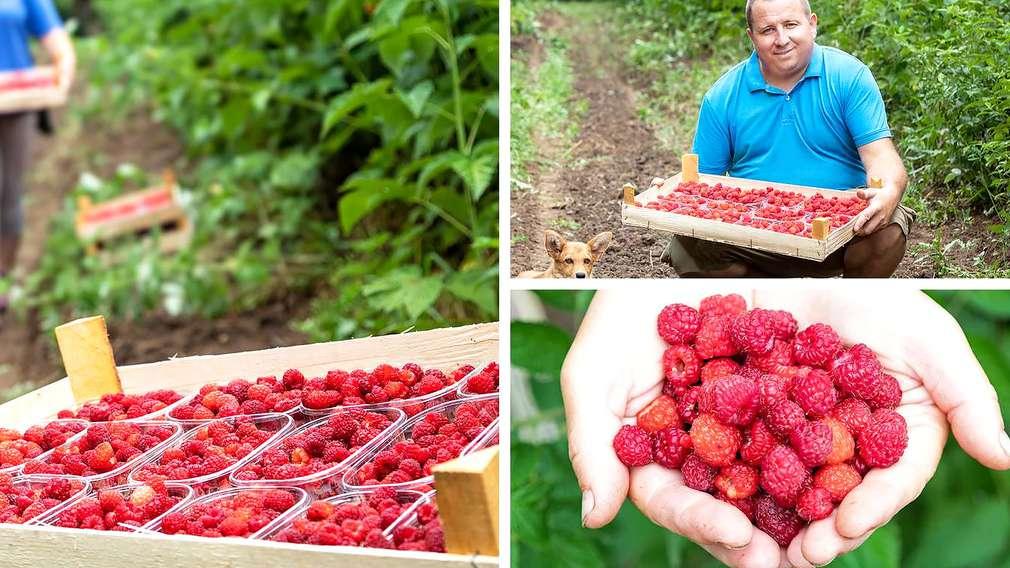 OPG Ivančan - domaće bobičasto voće iz ekouzgoja